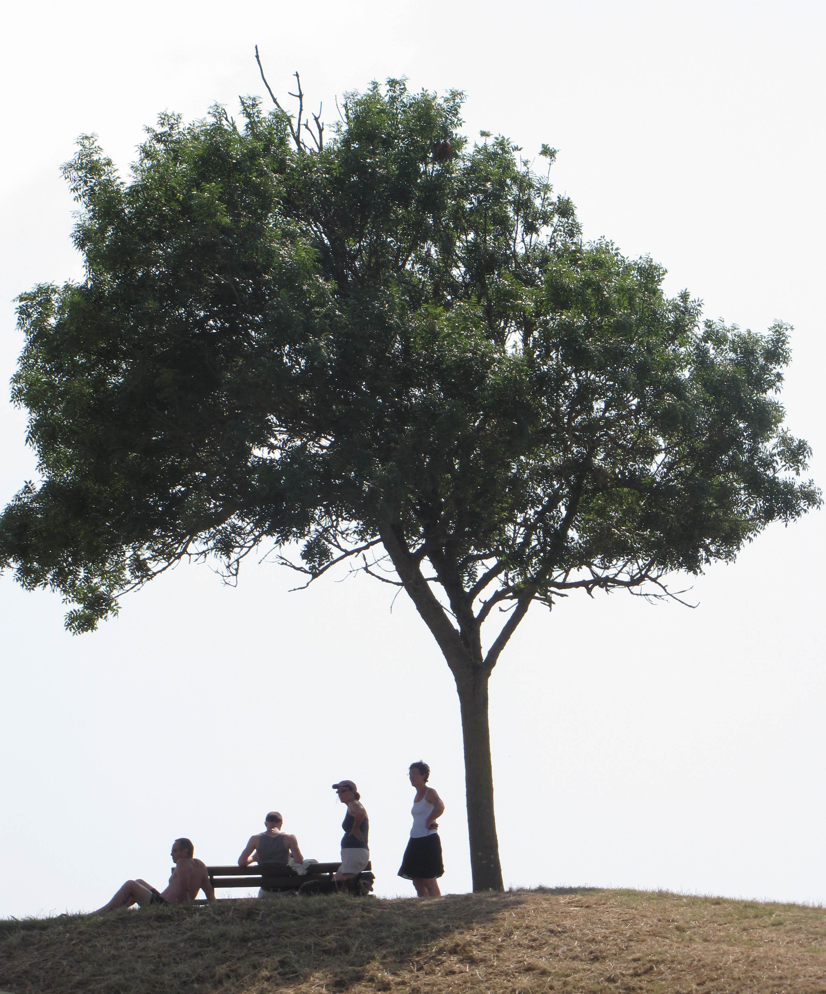 Oléron 29°4,  juil 13 (1 sur 1).jpg