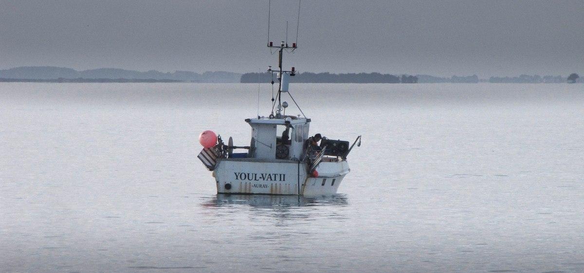 p'tite pêche matinale Baie de quiberon 7