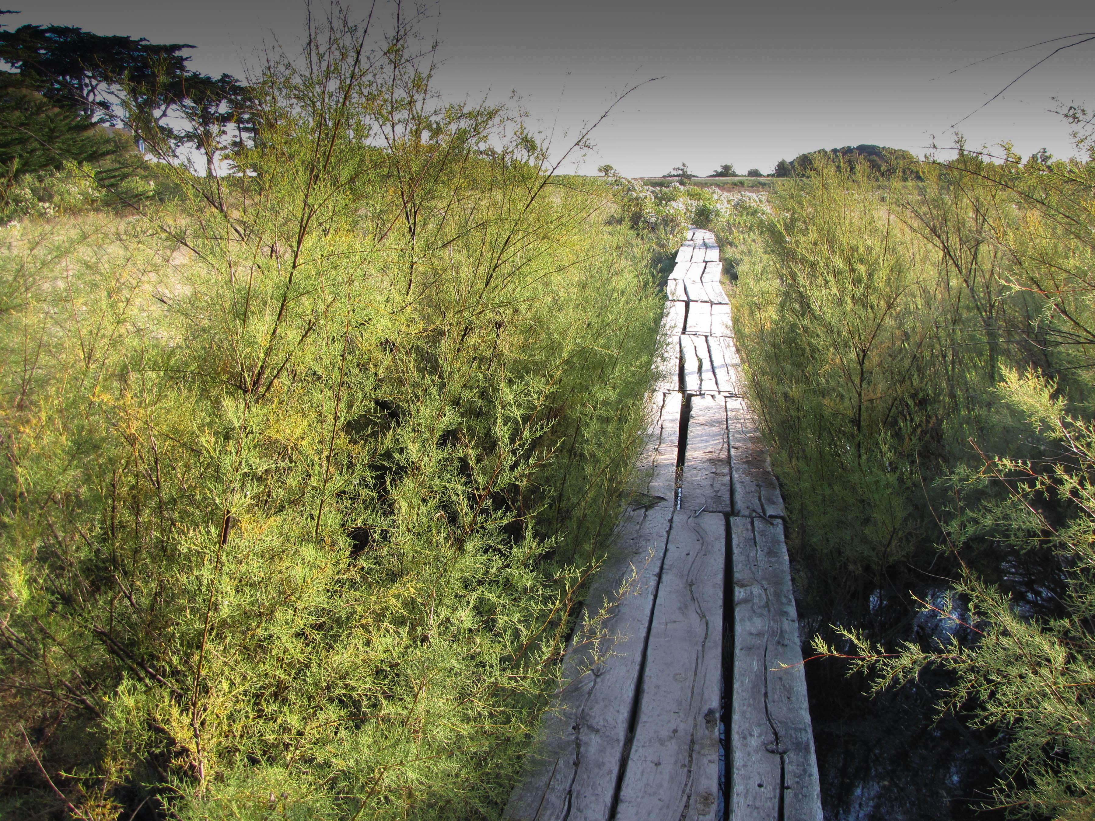 le chemin de bois 2, Brénéguy, 25 oct 10.jpg