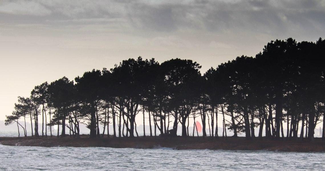 voiliers derrière les pins 6,3 mars 18