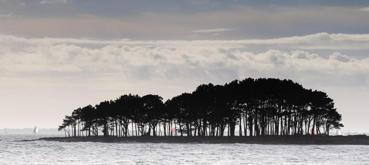 voiliers derrière les pins 7, 3 mars 18 (2)
