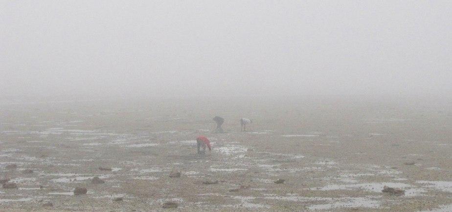 gratteurs dans la brume, 2 nov 17 (1 sur 1).jpg