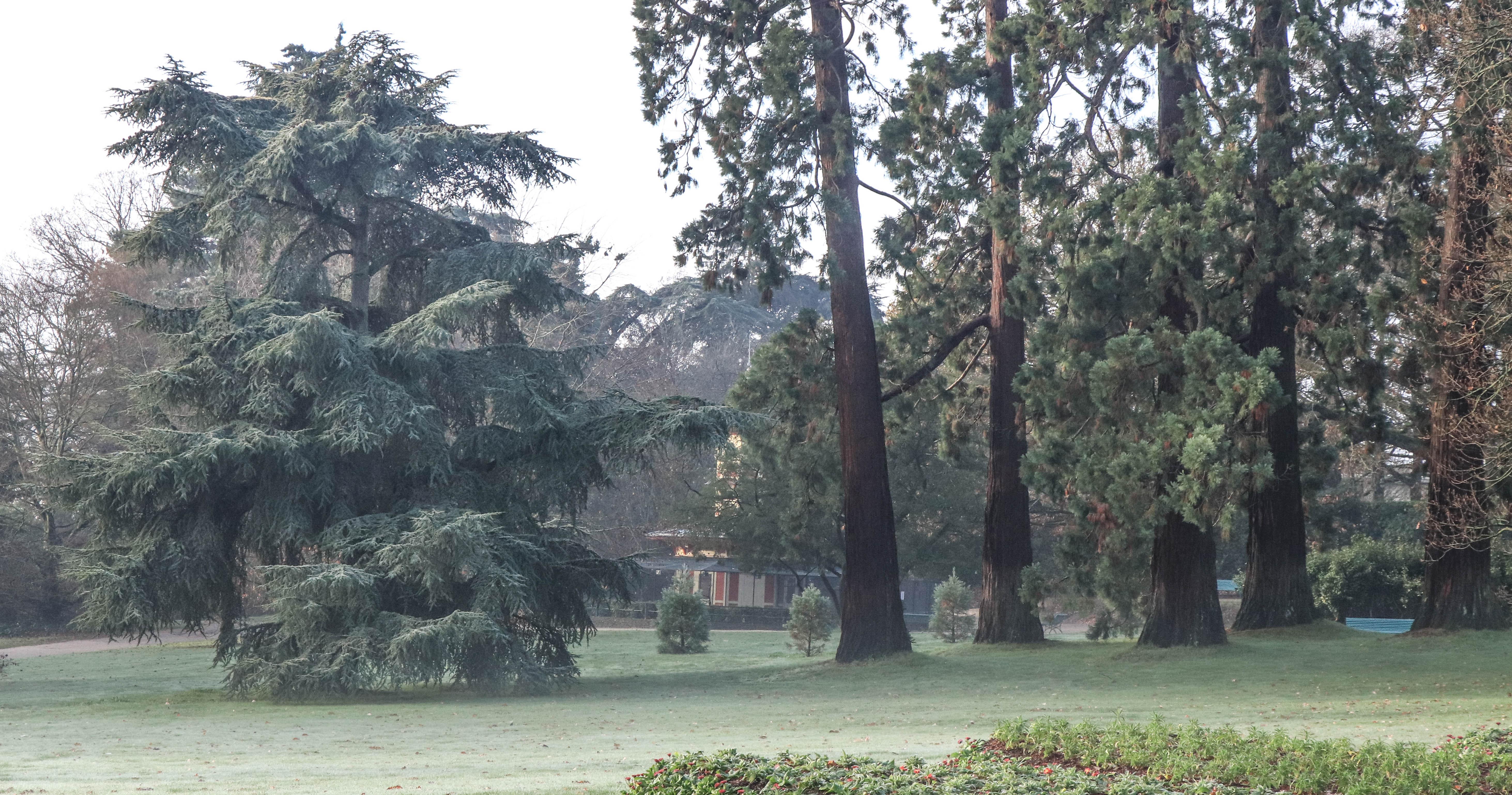 parc du Thabor, rennes, 16 déc.18, 10h18 (1 sur 1).jpg