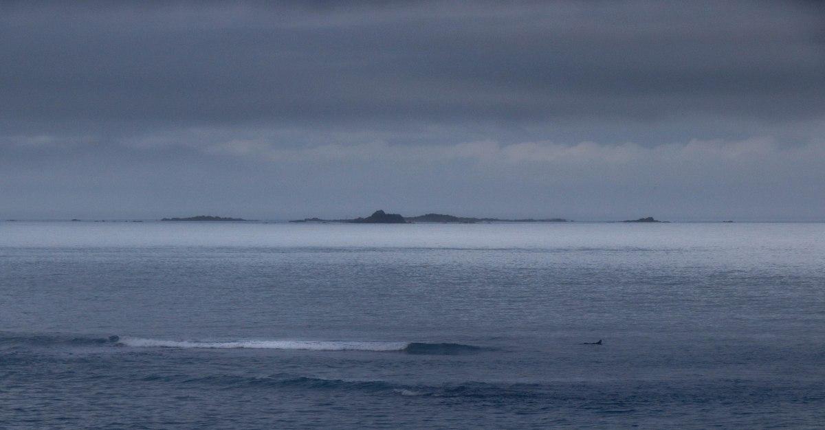 surfeur, sables d'or, 6 févr 19, 12h23