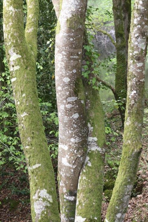 troncs enlacés, ,étang de la corbière, 19 avr 19, 17h01.jpg