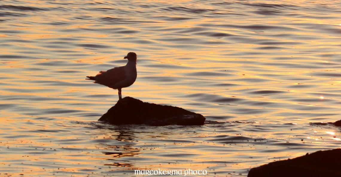 oiseaux de septembre, point er vil, 15 sept.19, 20h13-12