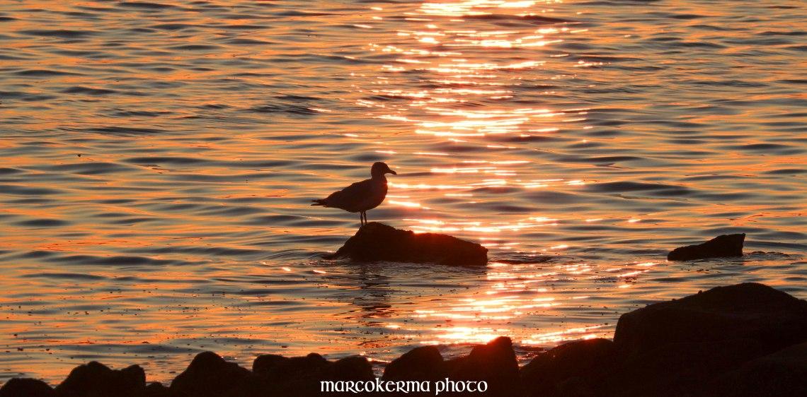 oiseaux de septembre, point er vil, 15 sept.19, 20h13.jpg