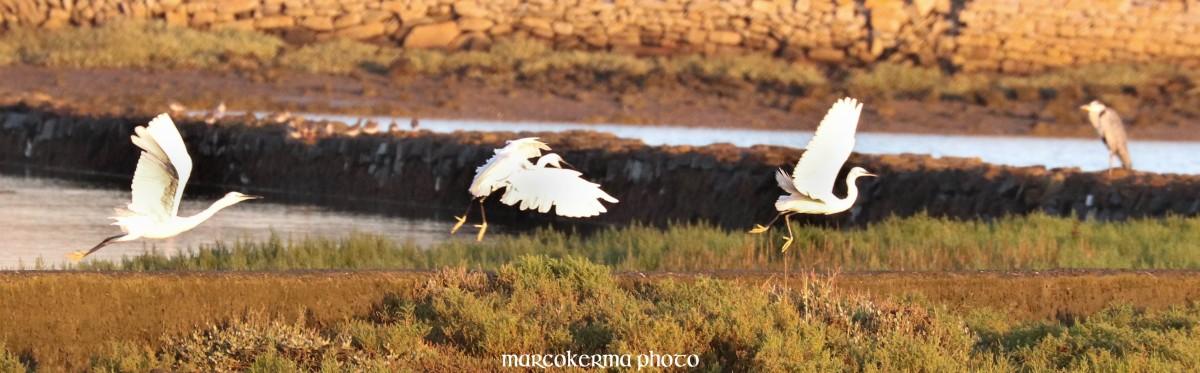 oiseaux de septembre, Toul Keun, 15 sept.19, 8h11