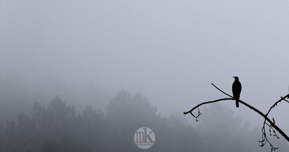 cormoran, la Vilaine, 17 nov 19, 12h44-29.jpg
