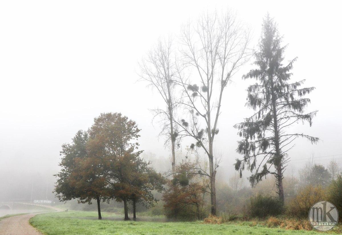 la Vilaine, arbres, 17 nov 19, 12h17.jpg