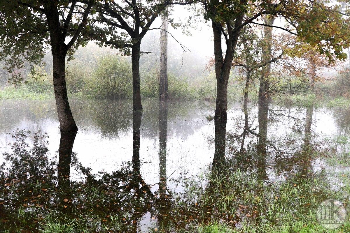 la Vilaine, arbres, 17 nov 19, 12h19.jpg