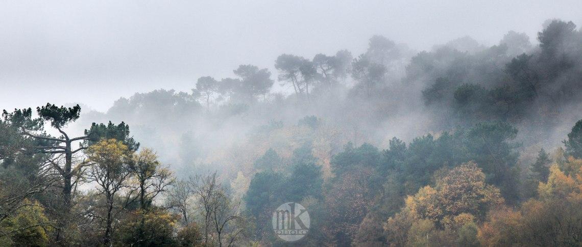 la Vilaine, arbres, 17 nov 19, 13h.jpg