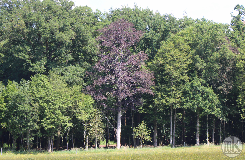 arbre, , Piré s-Seiche, 21 mai 2020, 15-58-26
