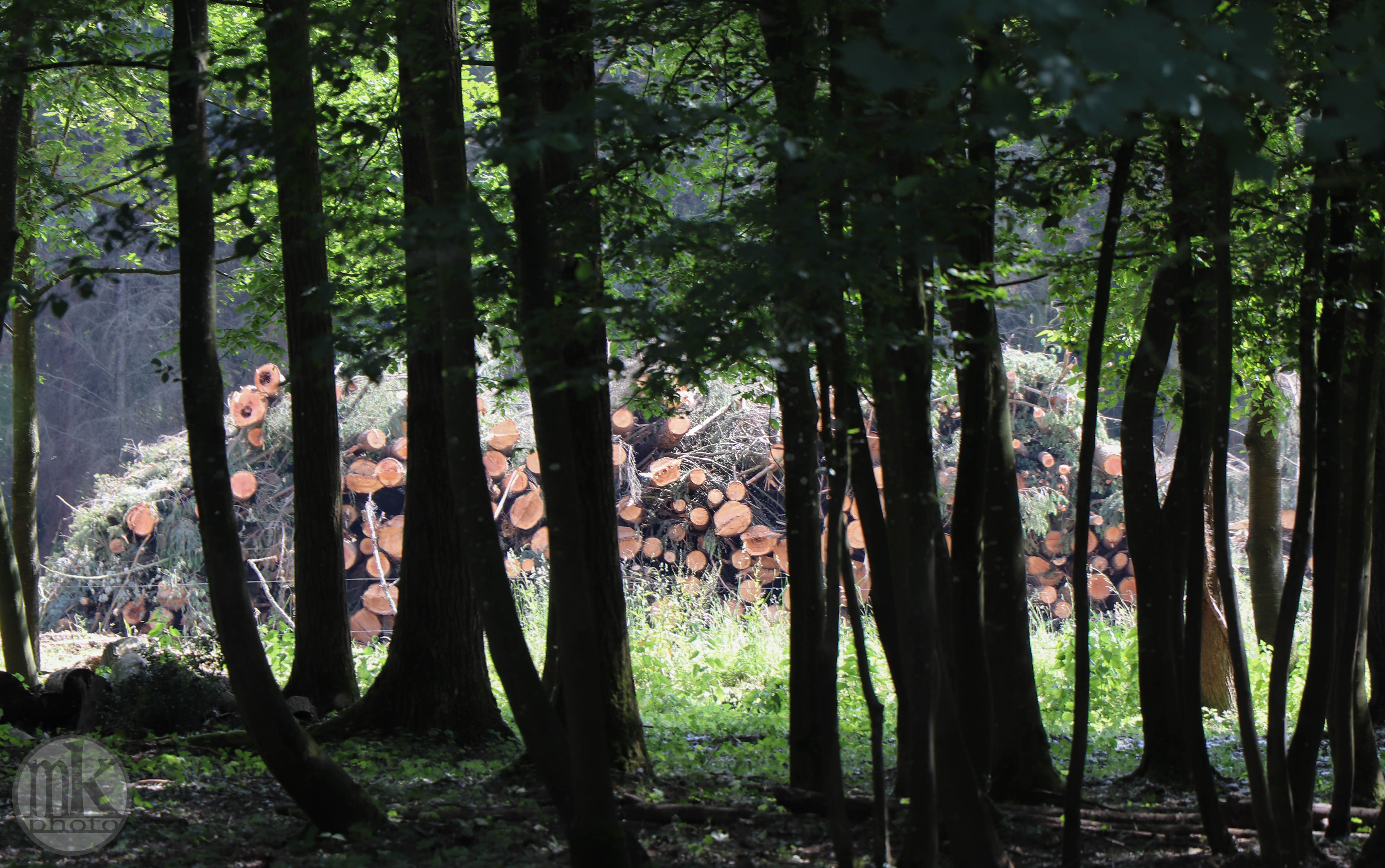 arbre, , Piré s-Seiche, 21 mai 2020, 16-10