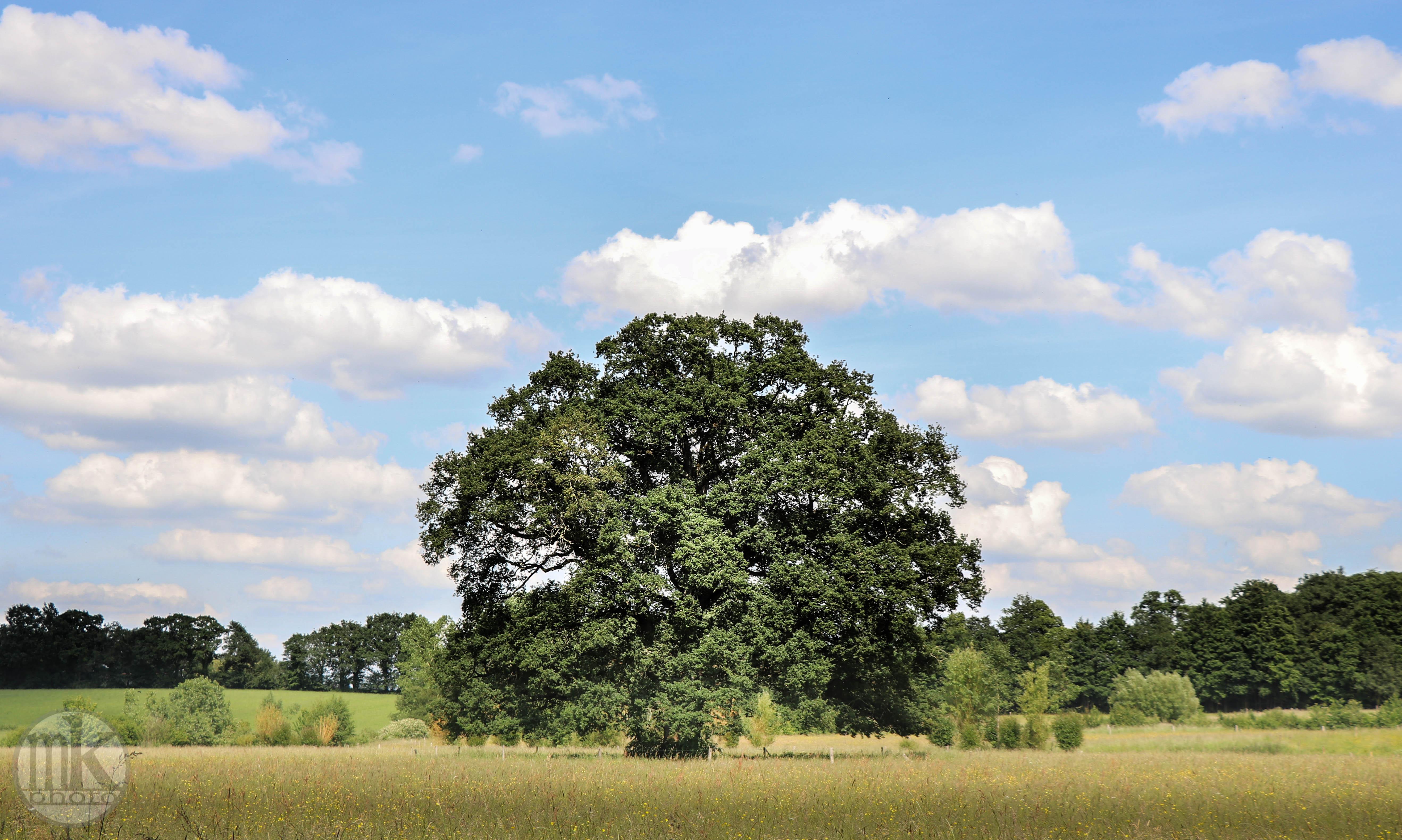 arbre, , Piré s-Seiche, 21 mai 2020, 16-27-08