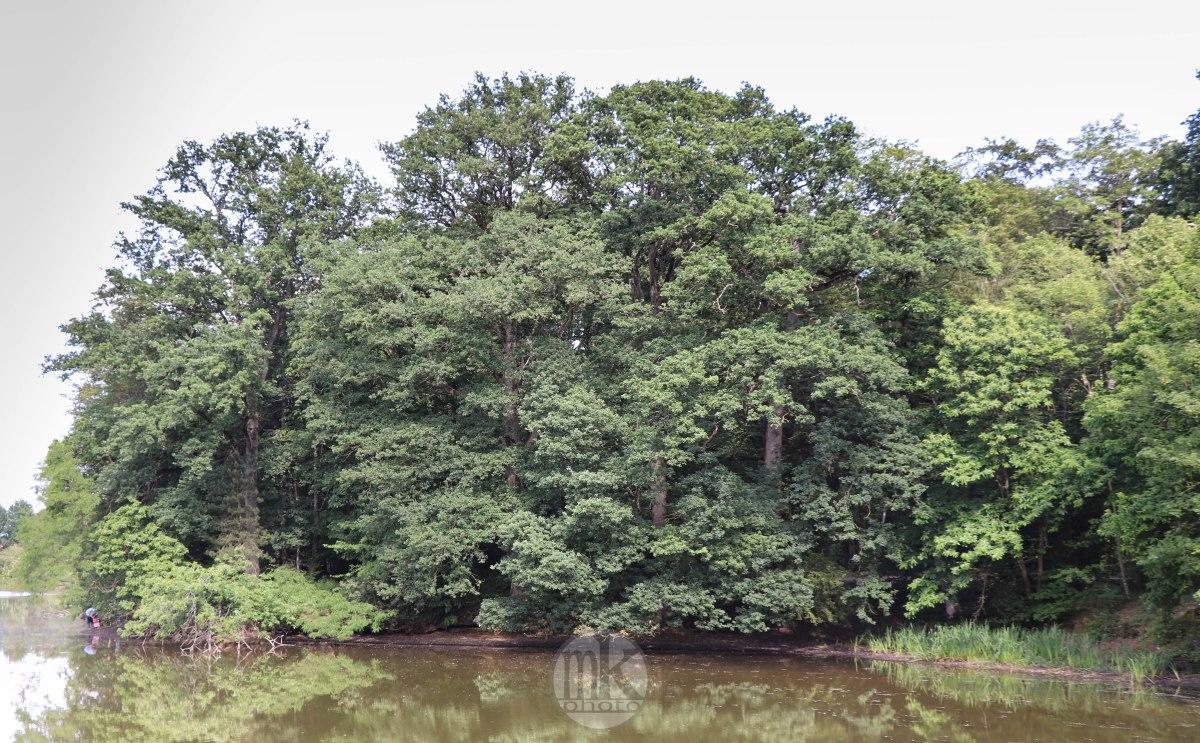 arbre, , Piré s-Seiche, 21 mai 2020, 17-22-37