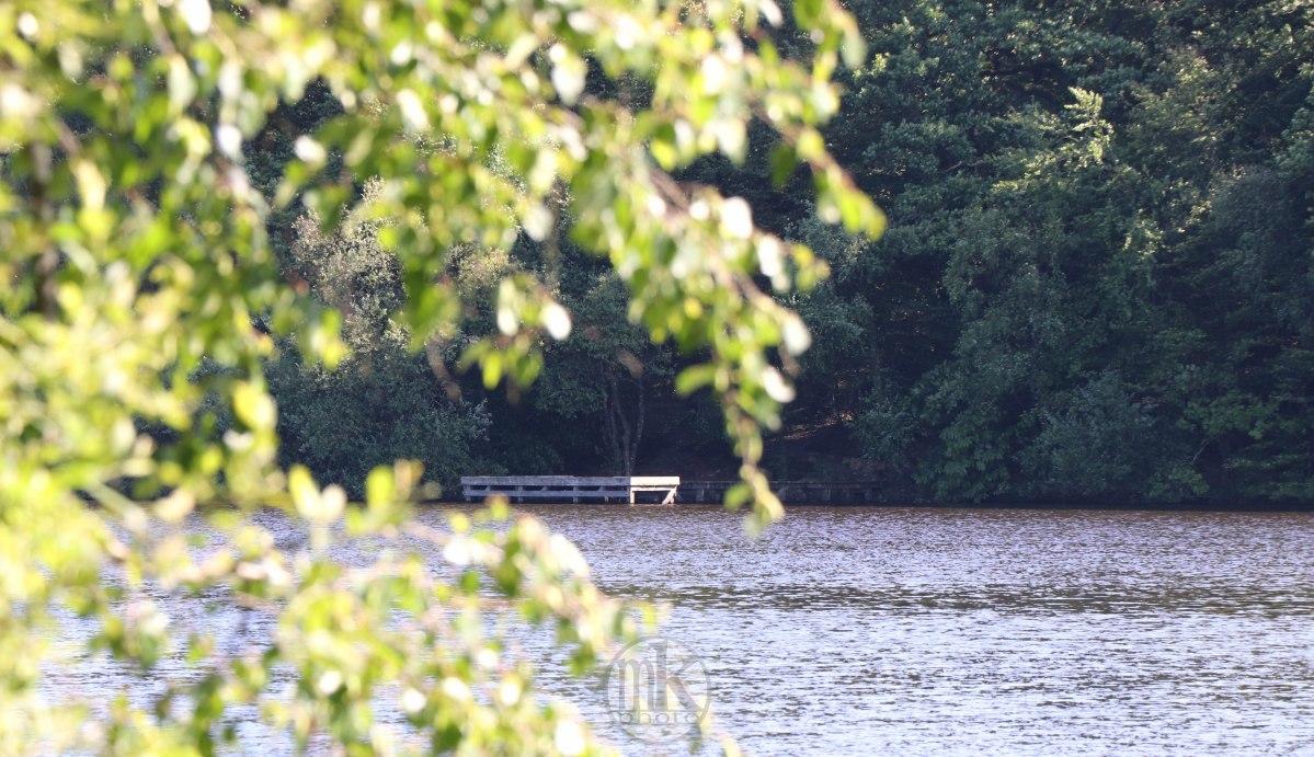 étang de la Corbière, 15 mai 2020, 17-25-20