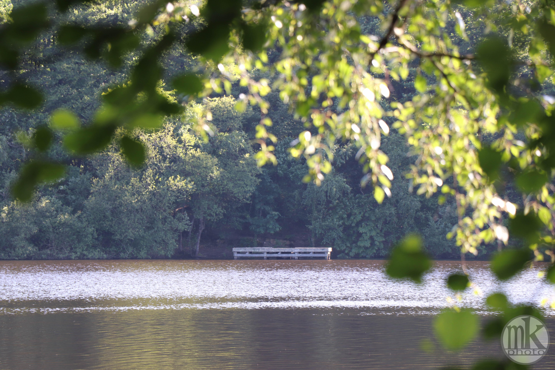 étang de la Corbière, 15 mai 2020, 17-33-18