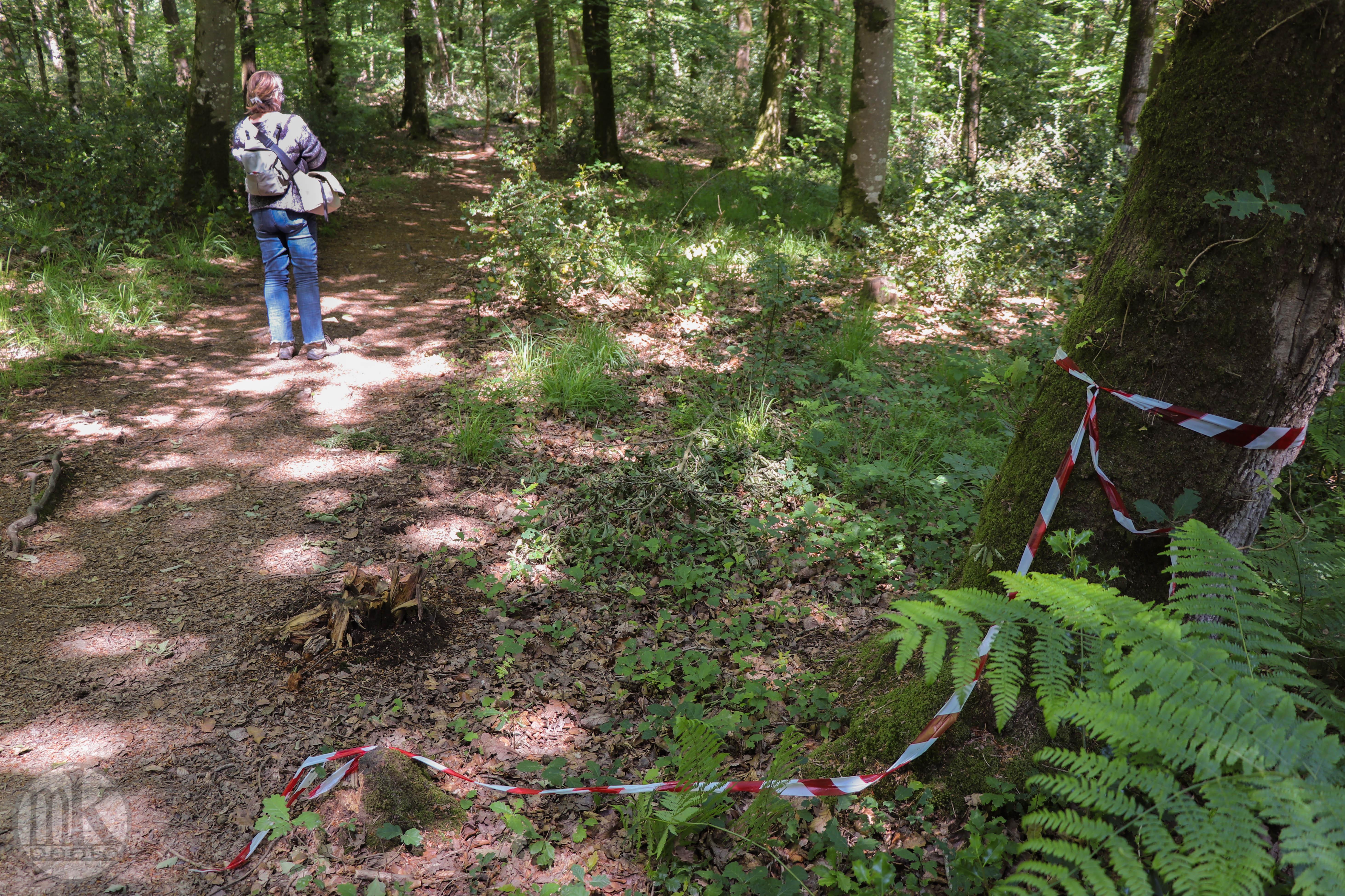 forêt de la Corbière, 15 mai 2020, 15h37