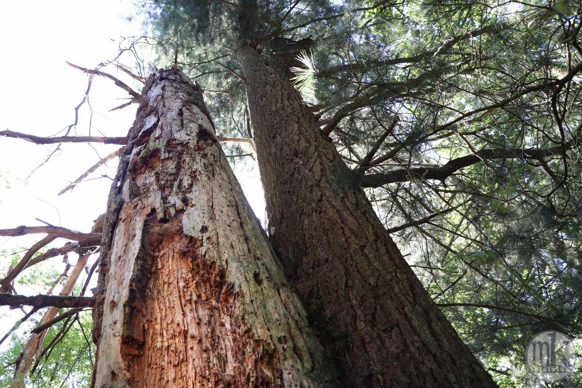 forêt de la Corbière, 15 mai 2020, 15h56