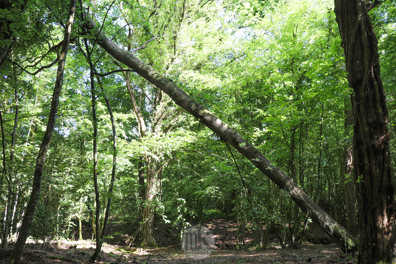 forêt de la Corbière, 15 mai 2020, 16h59
