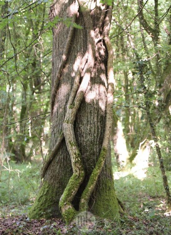 forêt de la Corbière, 15 mai 2020, 17h07
