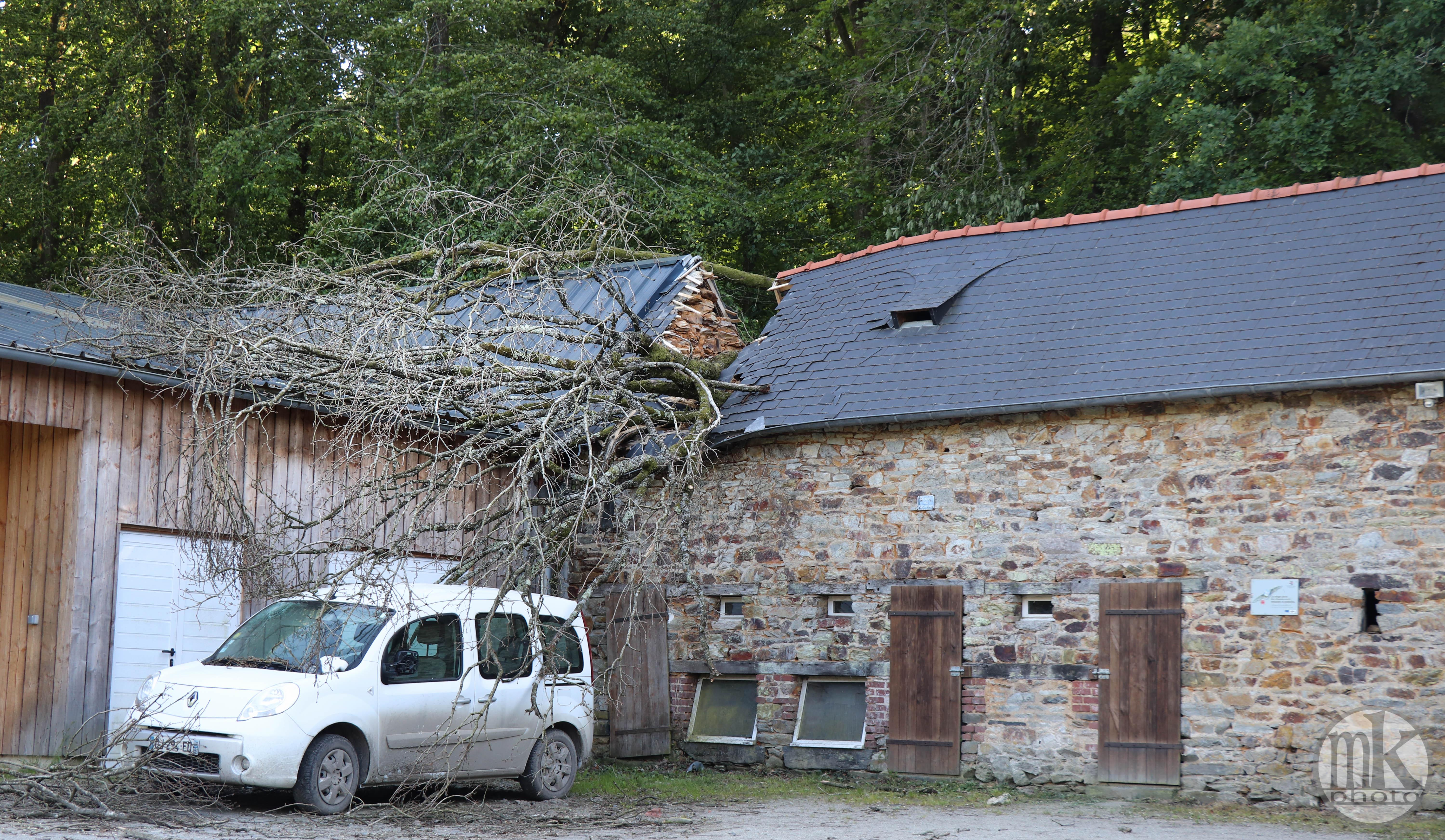 forêt de la Corbière, 15 mai 2020, 18h37
