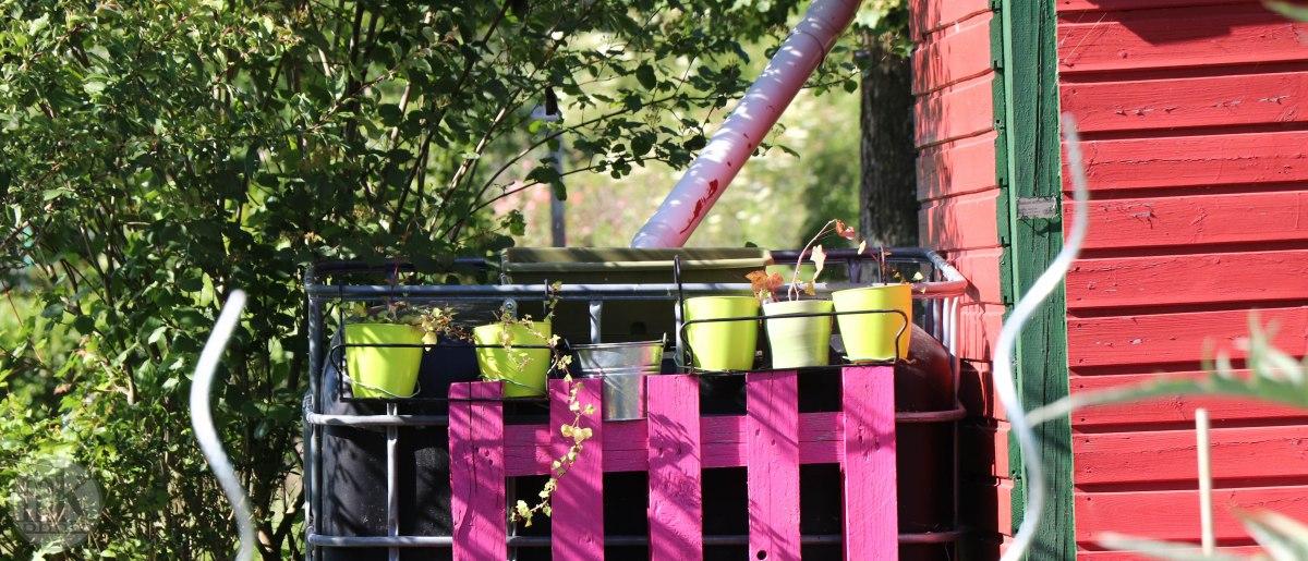 jardins, la bintinais, 24 mai 2020, 17-50