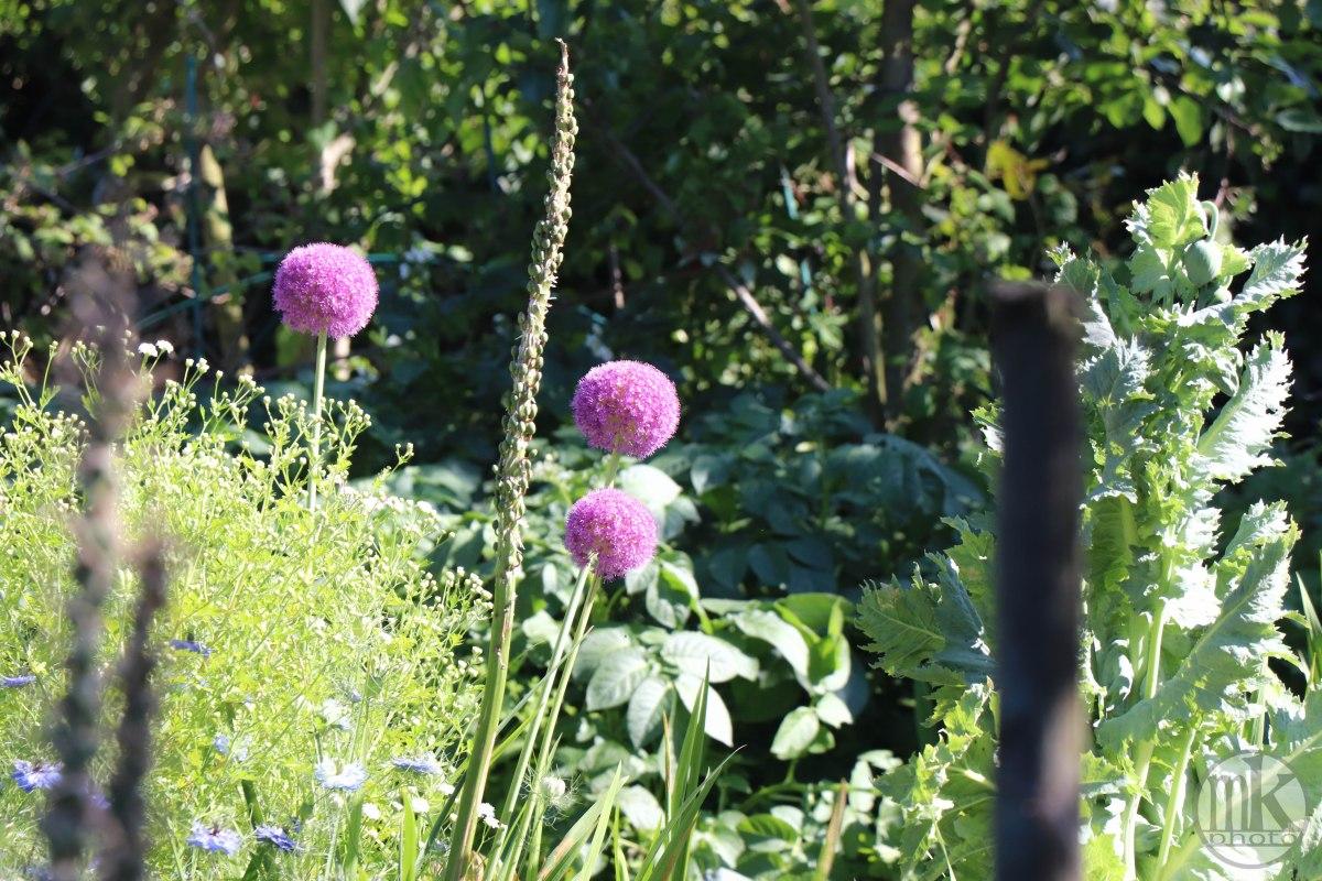 jardins, la bintinais, 24 mai 2020, 17-52