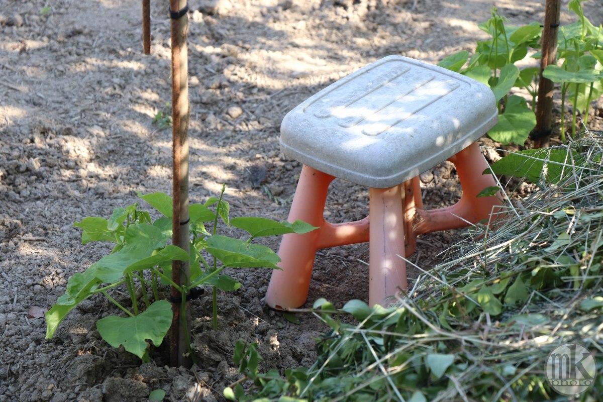 jardins, la bintinais, 24 mai 2020, 18-00-48