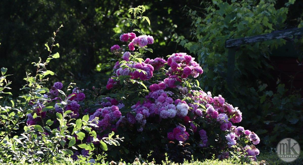 jardins, la bintinais, 24 mai 2020, 18-50-18