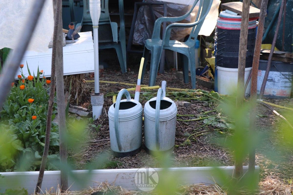 jardins, la bintinais, 24 mai 2020, 19-34-04
