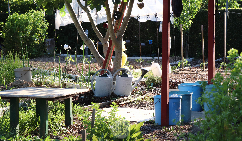 jardins, la bintinais, 24 mai 2020, 19-35-21
