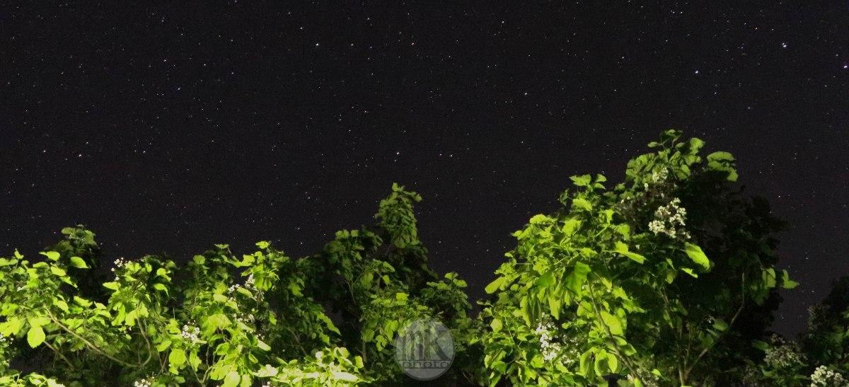 catalpa & étoiles, keranlay, 25 juin 20
